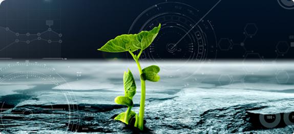 简析稳定性复合肥及应用技术